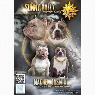 SUNNY BULLY (Продажа щенков) Американские Булли