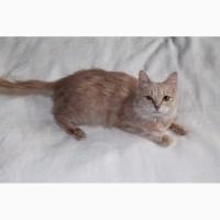 Рыжая кошка Василиса