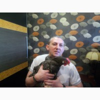 Лечение птиц и попугаев в Москве