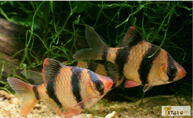 Фото 1/1. Аквариум 80л с рыбками в Уфе