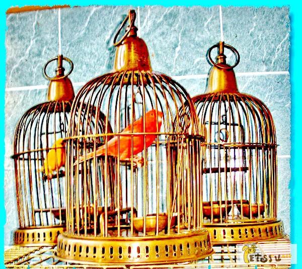 Фото 1/1. Канарейку купить, продам кенарей певчих, в Москве