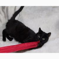 Чёрная кошка Герта
