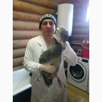 Лечение попугаев и птиц в Беланте Щербинка