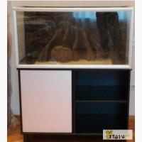 Продам аквариум Akvastabil с тумбой 250 Akvastabil в Красноярске