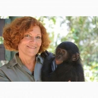 Выкуп обезьян и диких животных оказавшихся в сложной ситуации