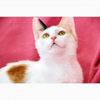 Веселая котёнка Китти в поисках дома