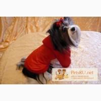 Пошив одежды для собак в интернет магазине Алефтинка, Владимир