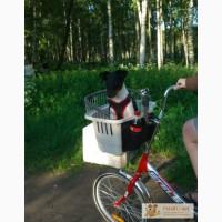 Корзина для перевозки собак на велосипед в Санкт-Петербурге