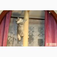Столбик когтеточка с упором в потолок в Санкт-Петербурге