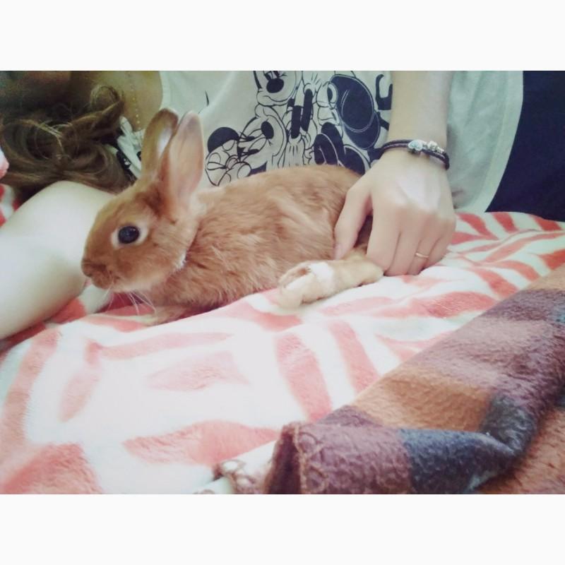 Фото 1/4. Декоративный кролик