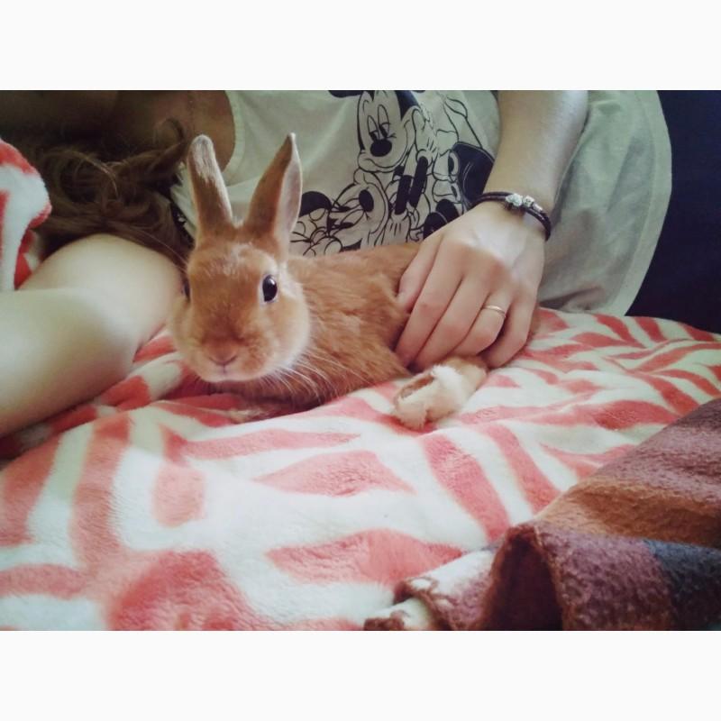 Фото 3/4. Декоративный кролик