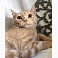 Нежный рыжик котенок Митрич ищет дом