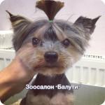 Стрижка собак, кошек Бабушкинская