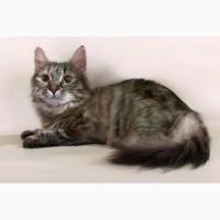 Пушистое счастье – кошка Меховушка в дар