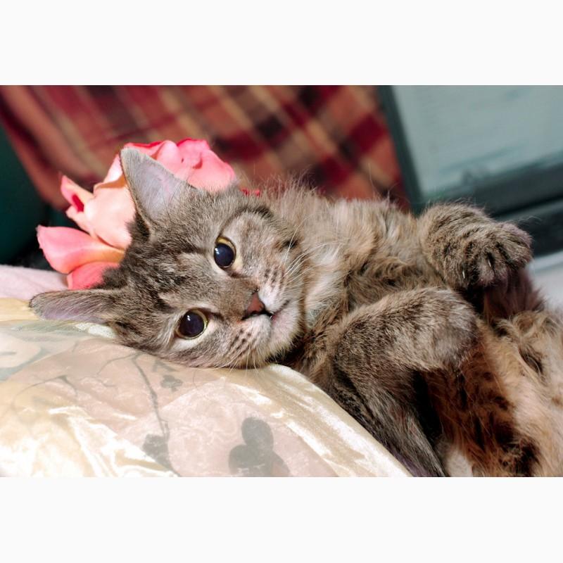 Фото 3/5. Пушистое счастье – кошка Меховушка в дар