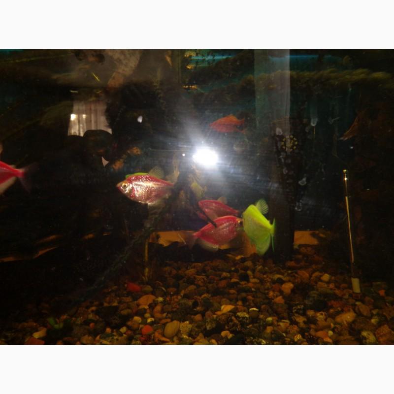 Фото 2/5. Растения в аквариум