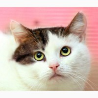 Самая дружелюбная кошка на свете - Роксолана в дар