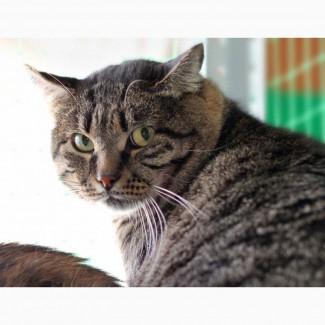 Максимилиан-брутальный кот ищет дом, где его поймут
