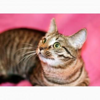 Полосатый лапушка котенок Максик в дар