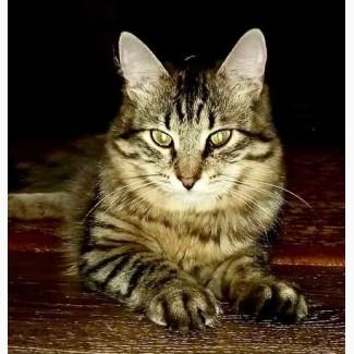 Молодой котик Антоша ждет своего человека