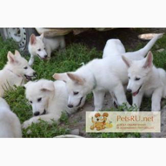Картинки: пушистые щенки прикольные картинки, видео и фото животных