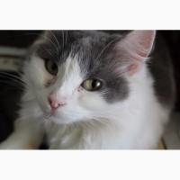 Ласковая кошка Лиза