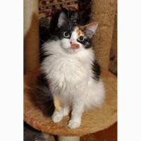 Болезненная котёнка Розик нуждается в хозяевах и доме