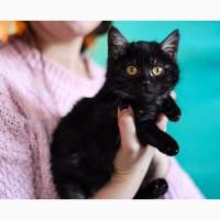 Котенок уникального окраса черный дым - Пижон в дар