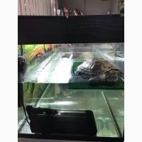 Отдам красноухую черепаху в добрые руки (МСК)