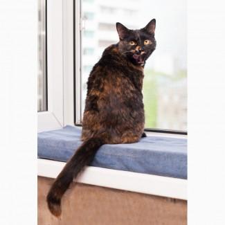 Джулия - чудодейственная кошка в дар