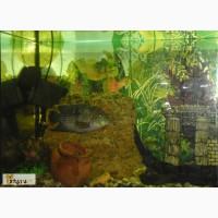 Продам аквариум JUWEL в Омске