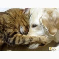 Домашняя передержка кошек и собак