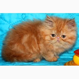 Плюшевый котик красный мрамор Джаник