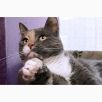 Кошка мурчалка Любава снова ищет дом
