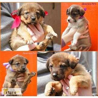 Милые щенки в добрые и заботливые руки! в Москве