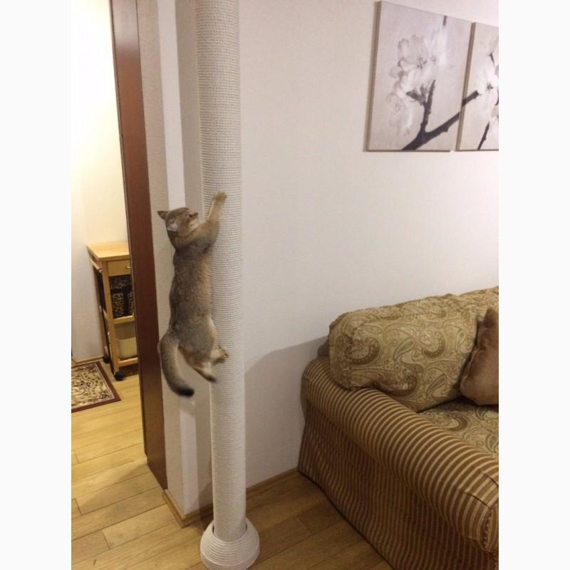 Когтеточка от пола до потолка своими руками 4