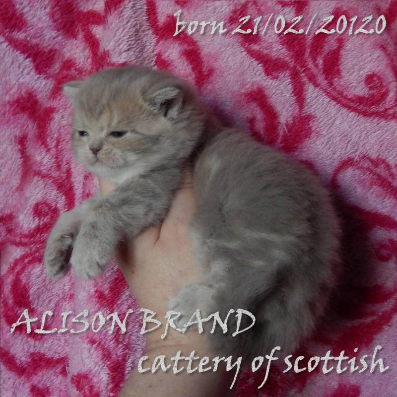 Фото 2/6. Шотландские котята