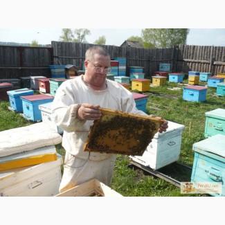 Продам пчел, пчелопакеты и пчеломаток. Порода Карника и Карпатка