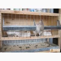 Клетку для кур в Челябинске