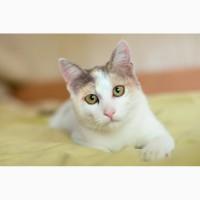 Ищет свою семью и дом котёнок Изюминка