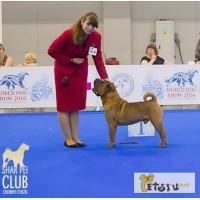 Шар-пей щенки от Чемпиона Мира 2016