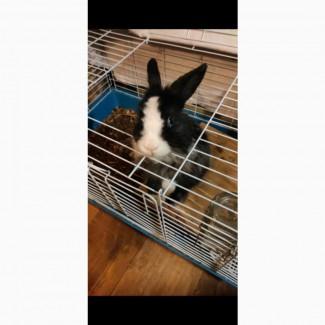 Отдаем кролика -девочку в добрые руки
