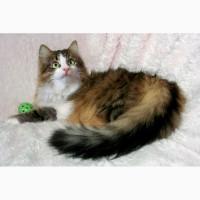 Кошка Люлю – зеленоглазая пушинка в дар