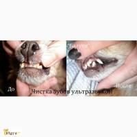 УЗ-чистка зубов. Удаление желтого налета и камней. Белые зубы и нет неприятного запаха из