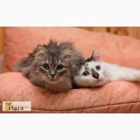 Серка и Вася все еще ищут один дом на двоих