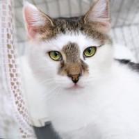 Толстушка Ласка кошка, излучающая доброту, ищет дом