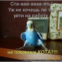Приму в дар попугаев, певчих птиц