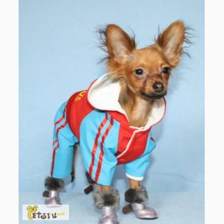 Одежда и обувь для собачек в Санкт-Петербурге