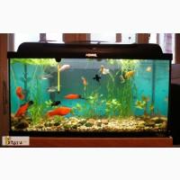 Рыбки и 3 аквариума в Пензе