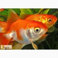 Аквариум с рыбками 70л(25х40х65)оформлен в Уфе